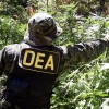 "Fire DEA Head Chuck Rosenberg for Calling Medical Marijuana a ""Joke"""